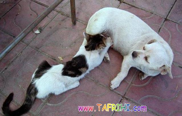 دوستی گربه وسگ
