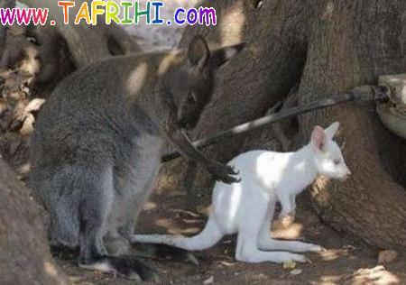 عکسهایی از حیوانات وحرکات خنده دار