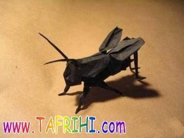 عکس حشراتی که از کاغذ ساخته شده اند