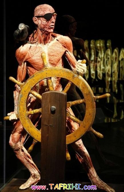 گزارش تصویری از یک موزه آناتومی انسان