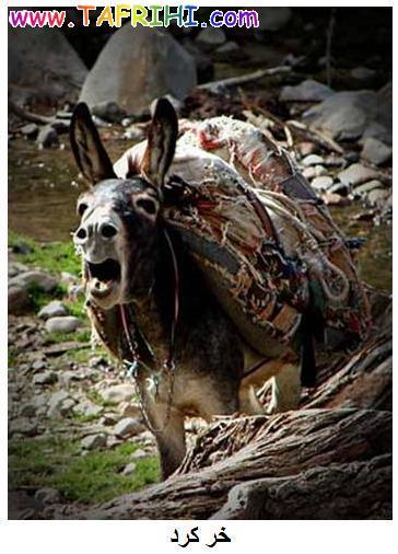 عکسهایی از انواع خر Tafrihi.Com