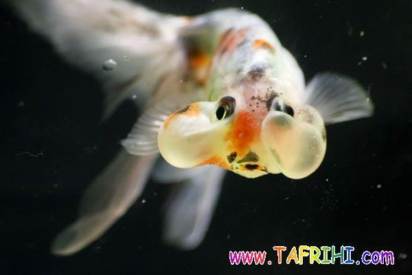 تصاویری شگفت انگیز از عجیب ترین حیوانات دنیا
