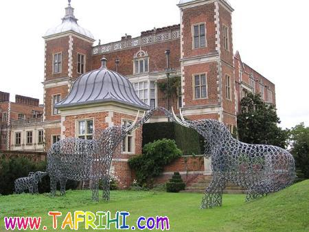عکس: هنر نمایی با نعل اسب