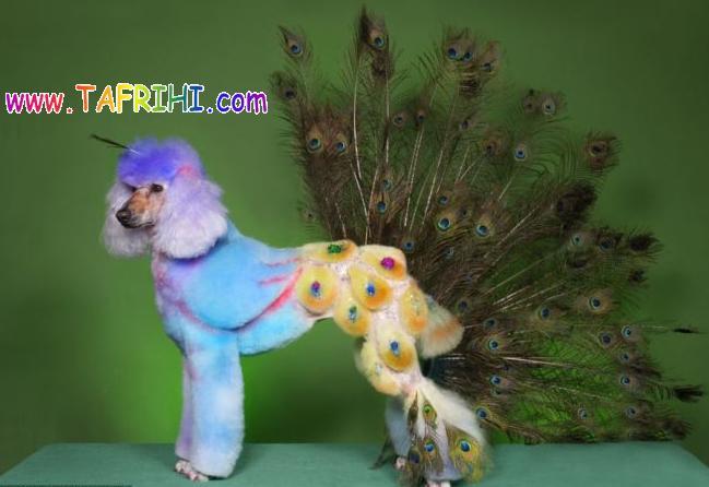 عکس هایی از سگ پشمالو به شکل حیوانات دیگر